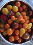 Bowl of Fresh Picked Heirloom Tomatoes